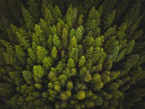 equity crowdfunding cannabis DigitalAMN